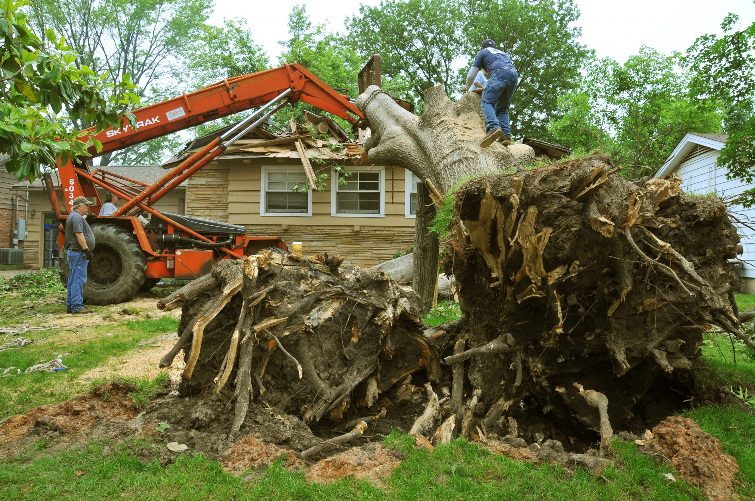 Will Homeowner's Insurance Cover Tree Removal?