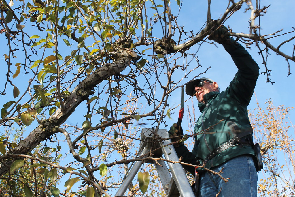 Tree Pruning Mistakes – How To Avoid