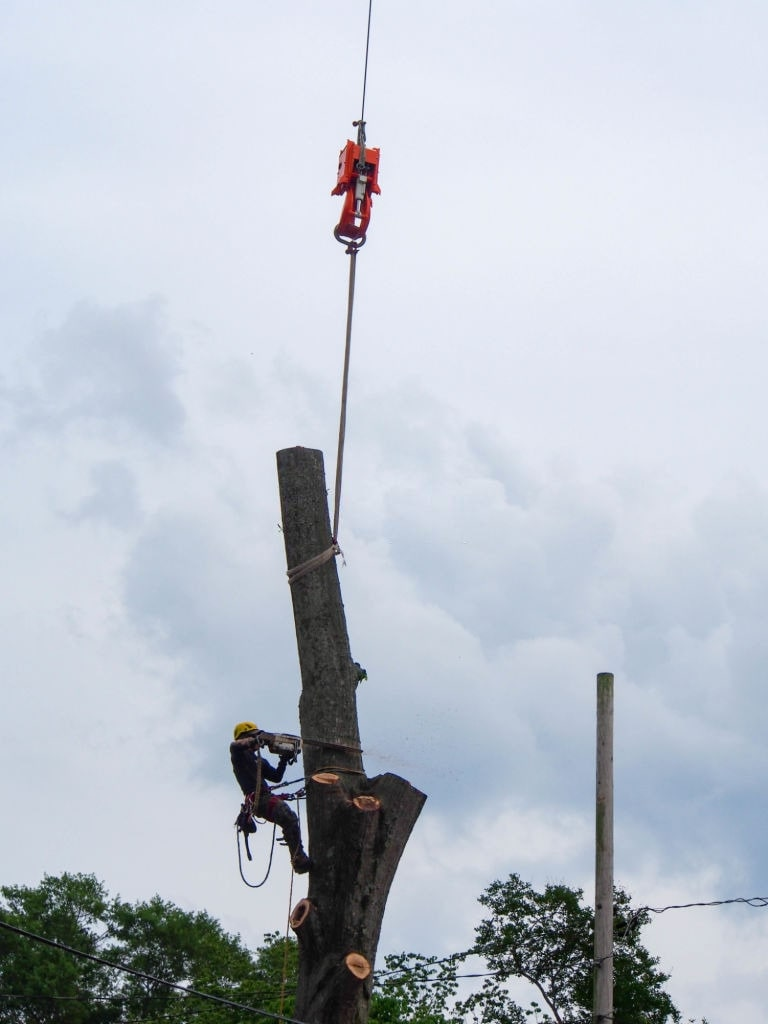 Removing Tree Ipswich