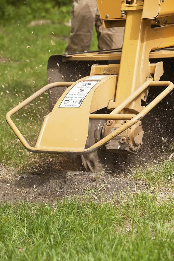 Stump Grinding Services In Ipswich