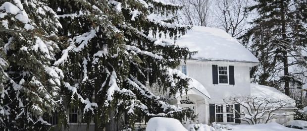 Protect Your Trees Against Winter Weather