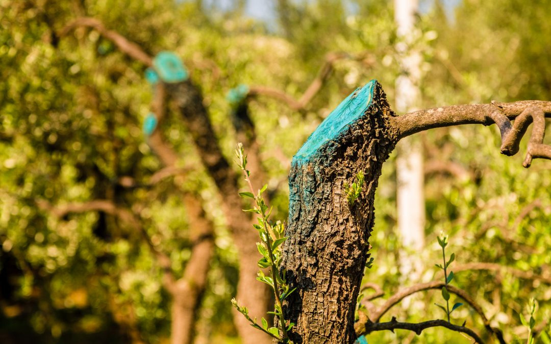 The Do's and Don'ts of DIY Tree Care