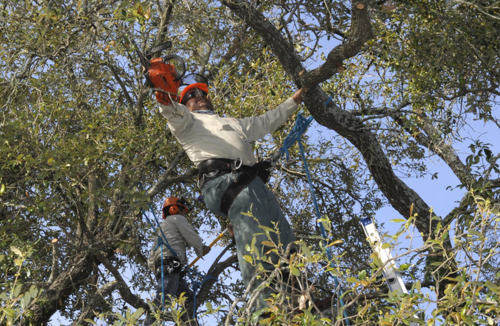 Do Trees Needs Proper Pruning?