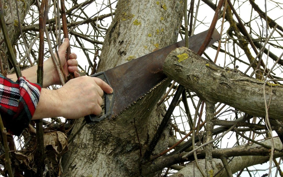 The Right Way To Trim A Tree