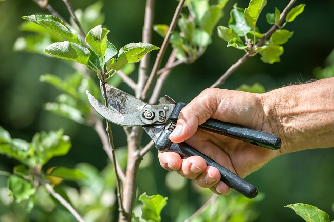 Benefits of Tree Trimming and Pruning