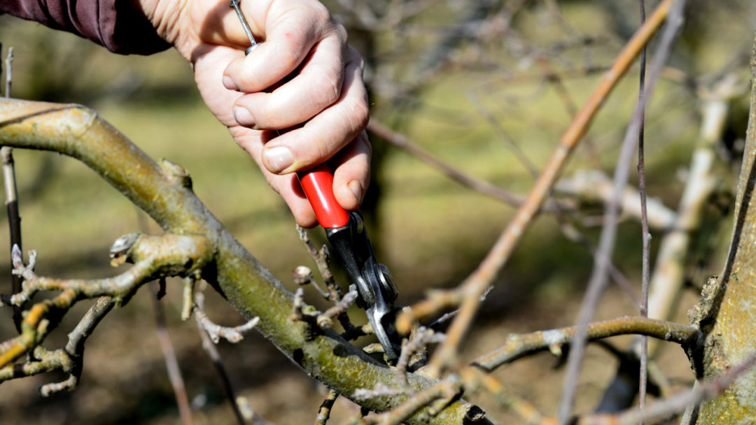 Everything to Know About Pruning Your Tree