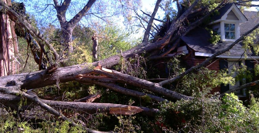 How to Handle Fallen Trees After a Hurricane