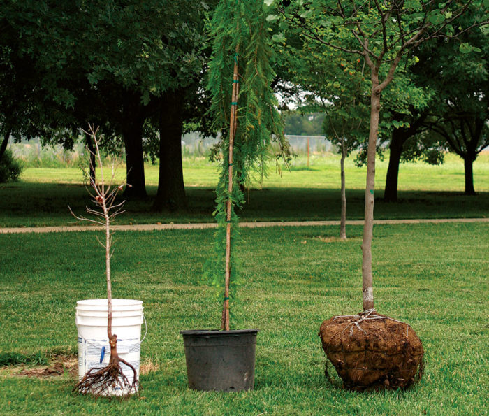 The Best and Worst Trees For Your Yard