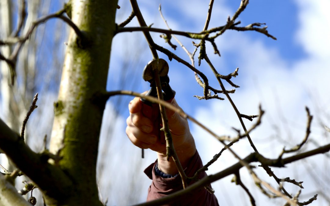 When & Why Trees Need Winter Pruning