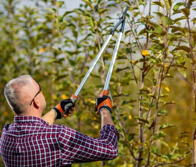 Tree Pruning & Maintenance