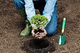 Feeding and Fertilizing Your Trees
