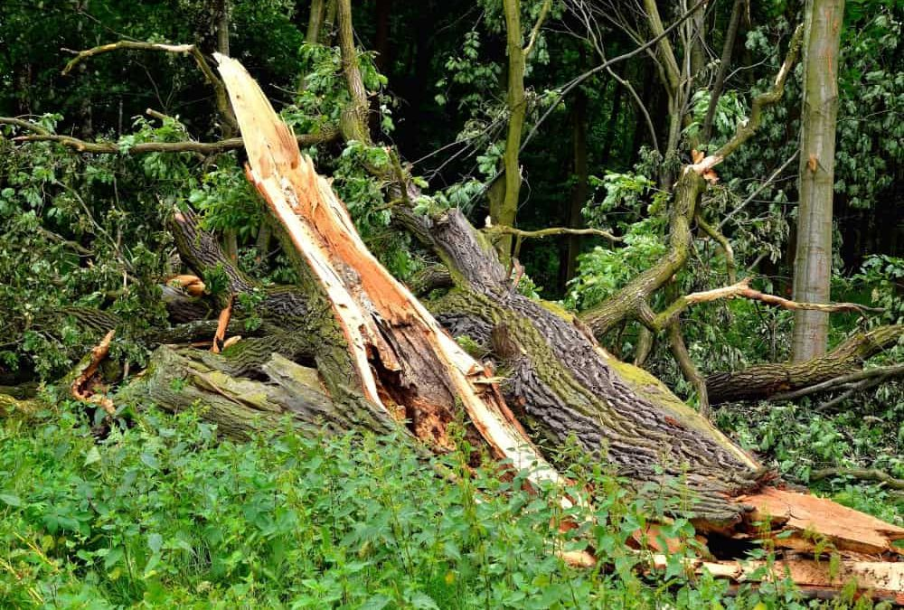 What To Do If Your Tree Is Struck By Lightning?