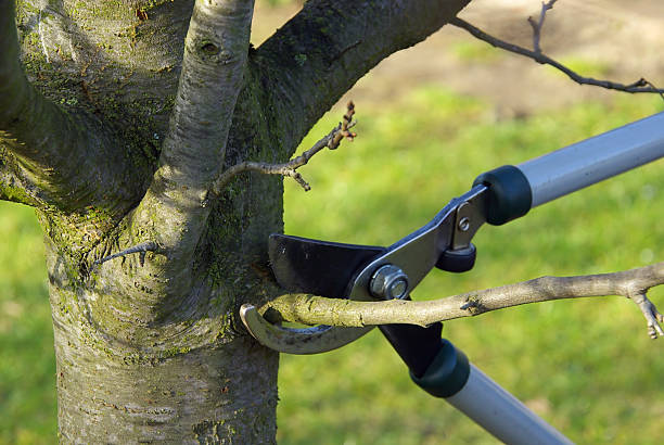 What Is the Difference Between Tree Trimming and Pruning?