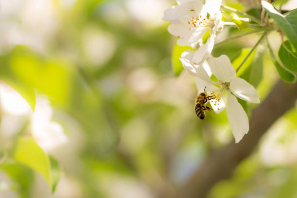 PRUNING TREES IN SPRING: Tree Trimming For A Safer Bloom