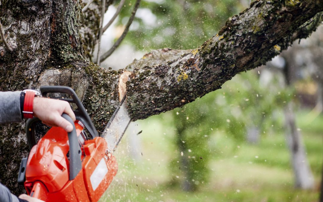Professional Guide: Should I Have My Dead Tree Removed?