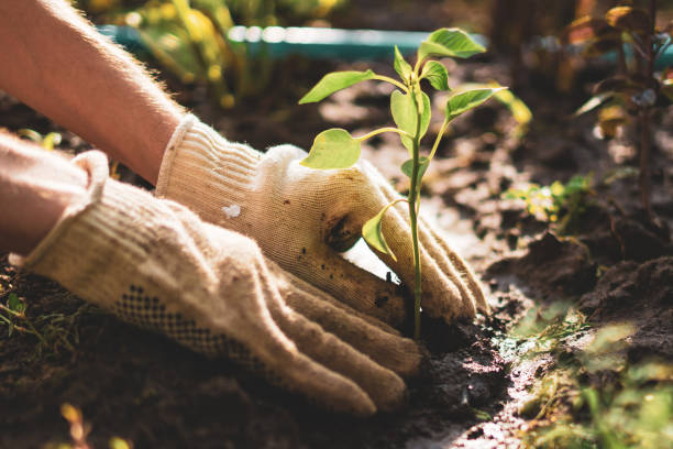 Ready To Plant A New Tree? How To Choose The Right Tree
