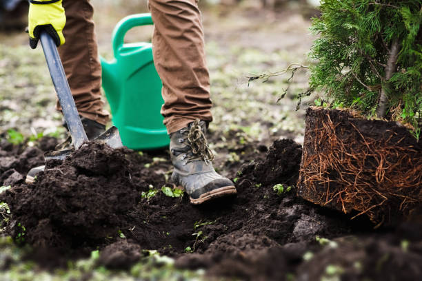 Planting Trees in Fall: Guide And Tips for Success