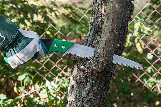 Effective Benefits Of Tree Lopping Services