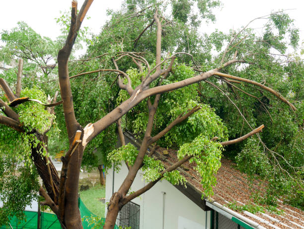 Care Of Damaged Tree: Information For Stressed Injured Tree