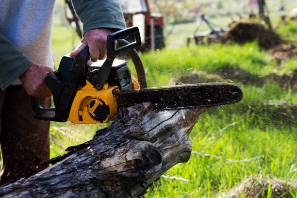Why Hire a Professional Tree Removal Service Company