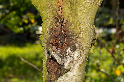 Arborist Service: Common Signs A Tree May Be Sick