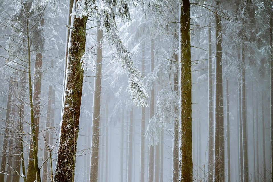 Tips Of Protecting Your Trees On Winter Fall
