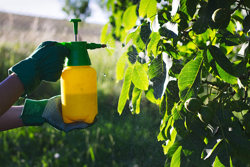 The Benefits Of Healthy Trees Around Your Home