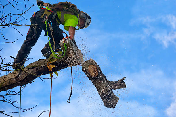 Keep Your Trees Healthy: Why Regular Tree Trimming is Important