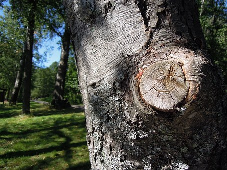 Commercial and Residential Professional Tree Removal Services