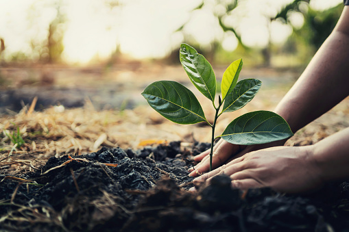 Explore the Best Tips for Planting Backyard Trees