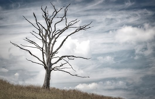 List Of Reasons Why You Should Remove a Dead Tree