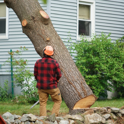 Here Are Some Tree Removal Techniques For Beginners