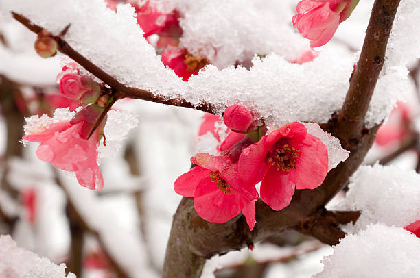 Top Trees: Popular Winter Blooming Trees