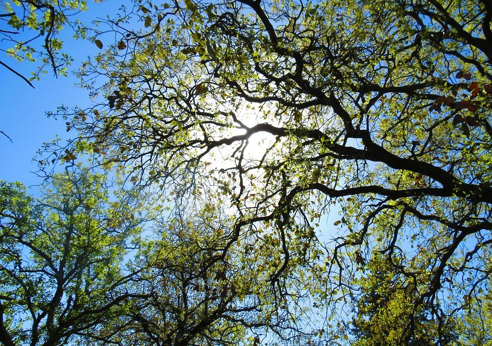 Expert Advice For Basic Tree Care and Maintenance