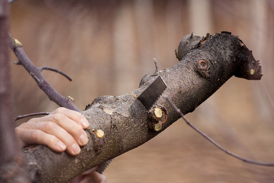 Why Tree Removal Requires the Proper Equipment