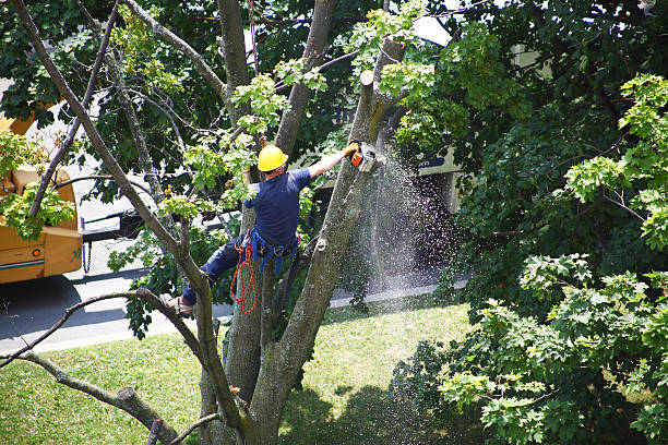Saving Trees: Why is Tree Trimming so Important?