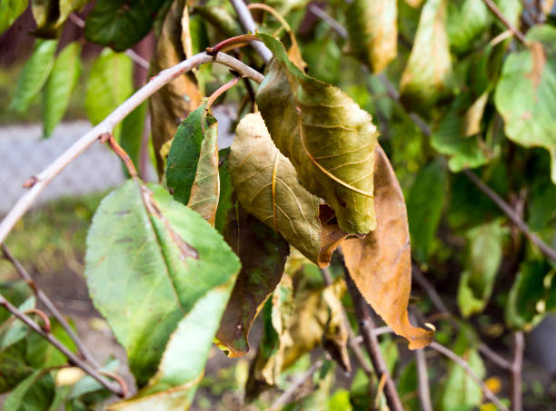 Tree Services: Common Tree Diseases And How to Treat Them