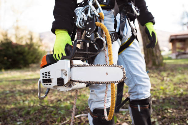Arborist or tree surgeon: What's the difference?