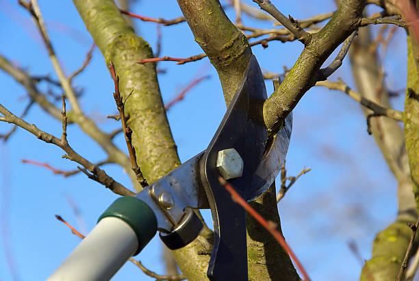 Effective Tips and Techniques of Tree Pruning